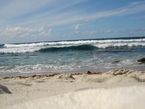Arena y algas en la orilla del mar