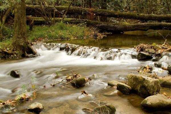 Hojas y piedras en el cauce del río