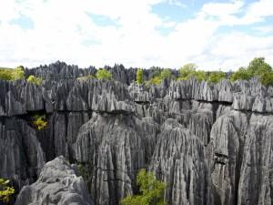 Árboles en un paisaje rocoso