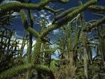 Árboles pulpo en Madagascar