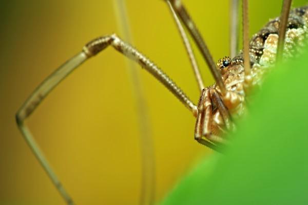 Grandes patas de una araña
