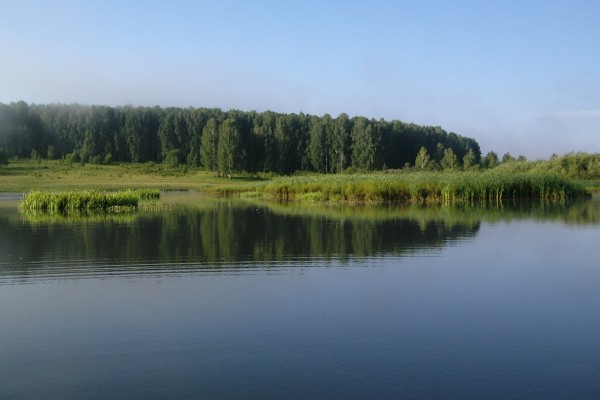 Grandes árboles verdes y plantas junto al agua
