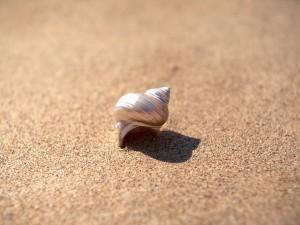 Postal: Bonita caracola sobre la arena