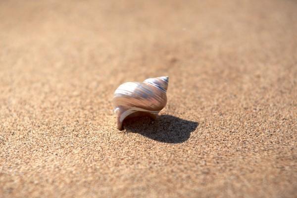 Bonita caracola sobre la arena