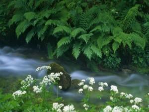 Postal: Plantas y flores junto a un riachuelo