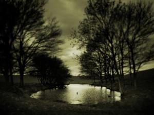 Postal: Árboles junto a un estanque