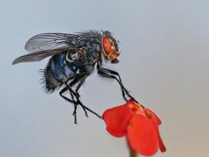 Una mosca sobre los pétalos de una flor
