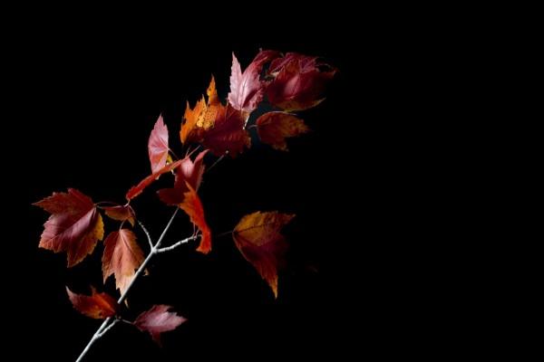 Una ramita con hojas otoñales