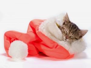 Gatito dormido dentro de un gorro de Papá Noel