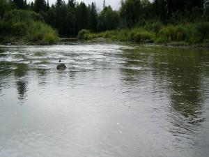 Piedras en el agua del río