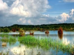 Postal: Plantas y árboles cubiertos de agua