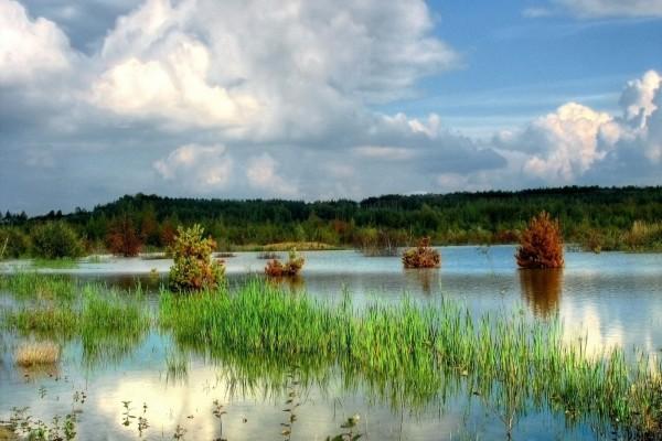 Plantas y árboles cubiertos de agua