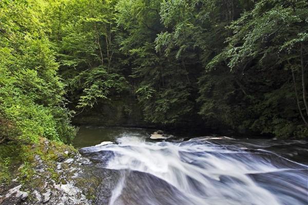 La corriente de un río entre árboles