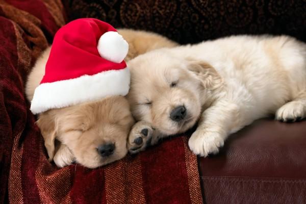 Dos perritos durmiendo sobre un sillón