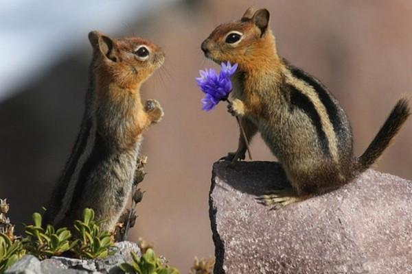 Dos ardillas muy románticas