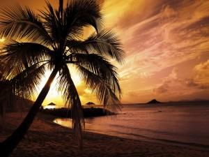 Postal: Palmera en una playa al atardecer