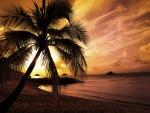 Palmera en una playa al atardecer
