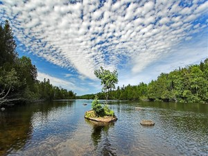 Pequeño árbol en el cauce de un río