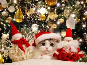 Un gato navideño