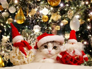 Postal: Un gato navideño