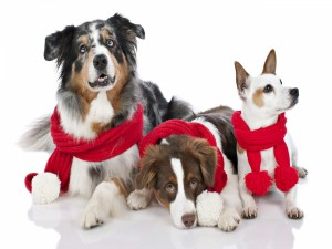 Tres perros con bufandas rojas