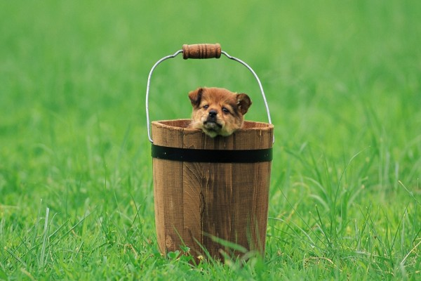 Perrito dentro de un cubo de madera