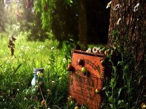 Margaritas y pequeñas manzanas junto a una caja de madera