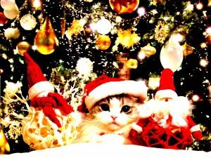 Un gatito entre luces y adornos navideños