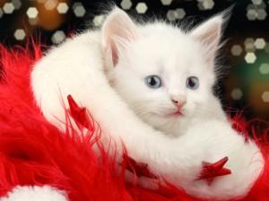 Gatito blanco entre la decoración roja de Navidad