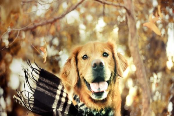 Un perro con bufanda en otoño