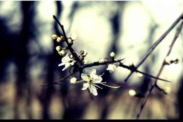 Rama con flores