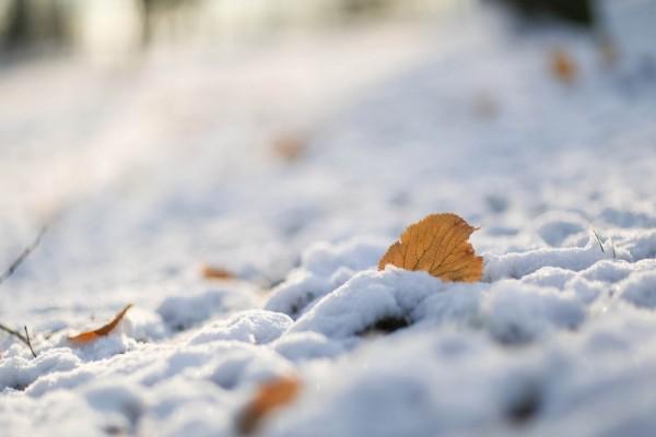 Hojas otoñales sobre la nieve