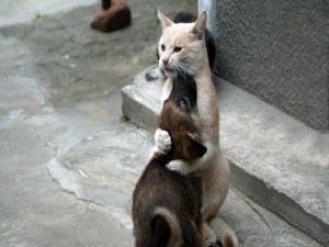 Postal: Gato abrazando a un perro