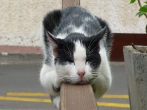 Postal: Gato dormido sobre una barandilla