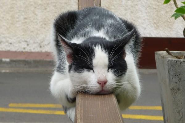 Gato dormido sobre una barandilla