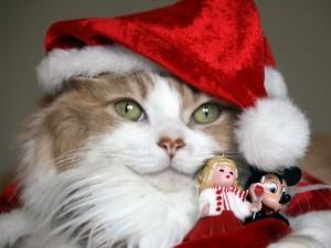 Un precioso gato con adornos de Navidad