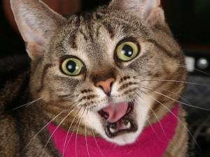 Un gato sorprendido