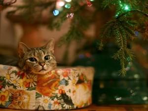 Un gato descansando junto al árbol de Navidad