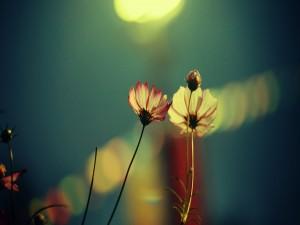 Postal: Delicadas flores silvestres
