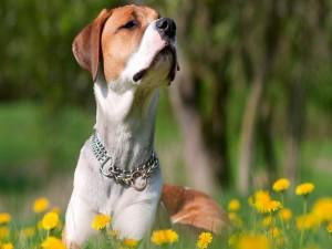 Un perro olfateando las flores