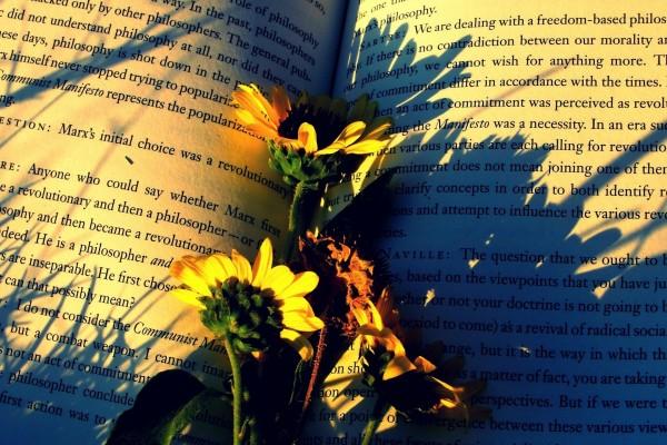 Margaritas sobre las páginas de un libro