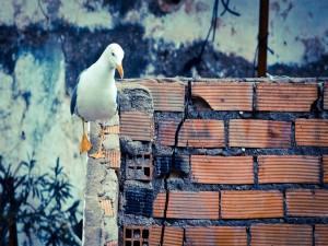 Postal: Gaviota caminando sobre un muro