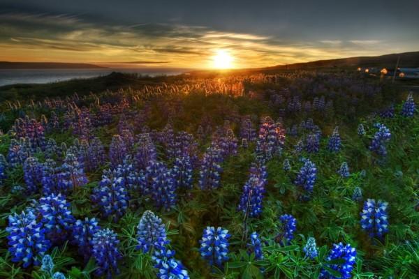 Campo con bellas flores al amanecer