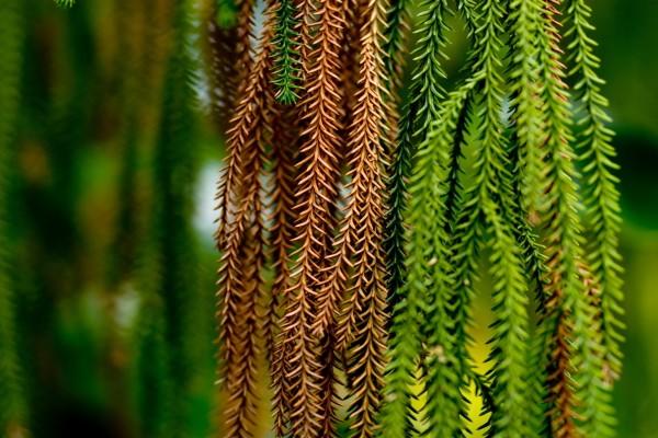 Ramas secas y verdes