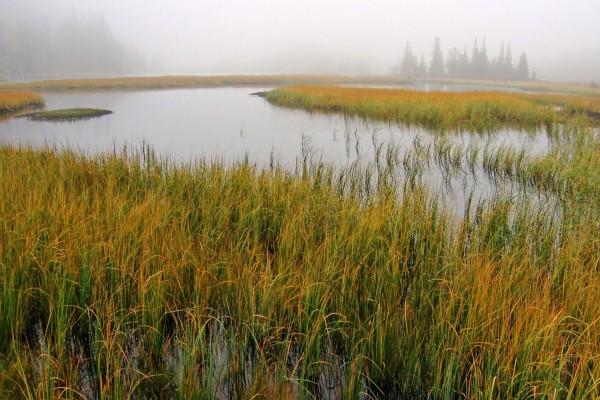 Niebla en un río cubierto de plantas