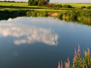 Nube reflejada en el agua de un estanque