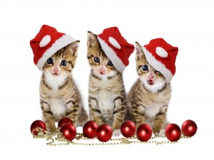 Postal: Tres lindos gatitos navideños