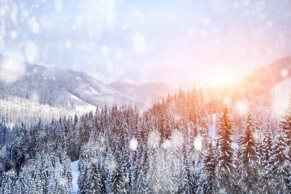 Paisaje cubierto de pinos nevados