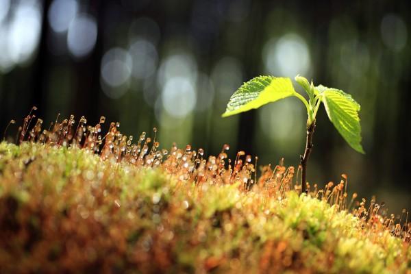 Planta y brotes creciendo en la tierra