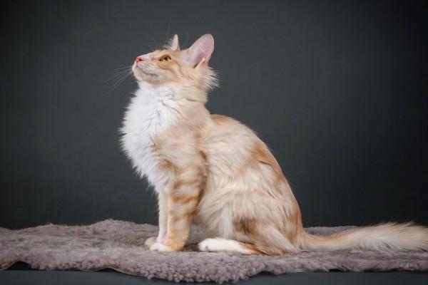 Un gato sentado en una alfombra